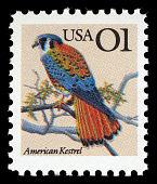 view 1c American Kestrel single digital asset number 1