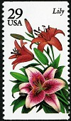 view 29c Lily single digital asset number 1