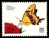 view 32c Schaus Swallowtail Butterfly single digital asset number 1