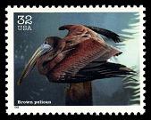 view 32c Brown Pelican single digital asset number 1