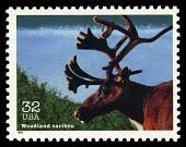view 32c Woodland Caribou single digital asset number 1
