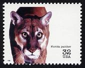 view 32c Florida Panther single digital asset number 1