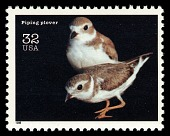 view 32c Piping Plover single digital asset number 1