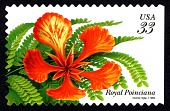 view 33c Royal Poinciana booklet single digital asset number 1