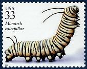 view 33c Monarch Caterpillar single digital asset number 1
