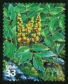 view 33c Dwarf Oregongrape and Snail-eating Ground Beetle single digital asset number 1