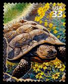 view 33c Desert Tortoise single digital asset number 1