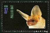 view 37c Pallid Bat single digital asset number 1