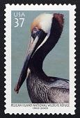 view 37c Brown Pelican single digital asset number 1