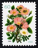 view 60c Five Varieties of Pink Roses single digital asset number 1