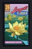 view 39c American Lotus single digital asset number 1