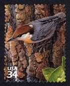 view 34c Brown-headed Nuthatch single digital asset number 1