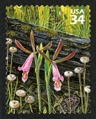 view 34c Rosebud Orchid, Pipeworts, Southern Toad and Yellow Pitcher Plants single digital asset number 1