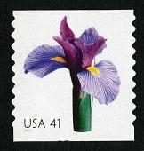 view 41c Iris single digital asset number 1