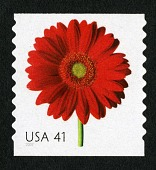 view 41c Red Gerber Daisy single digital asset number 1