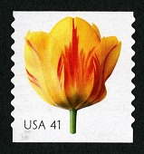 view 41c Tulip single digital asset number 1