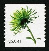 view 41c Chrysanthemum single digital asset number 1