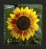 view 42c Sunflower single digital asset number 1
