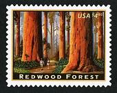 view $4.95 Redwood Forest single digital asset number 1