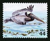 view 44c Brown Pelican single digital asset number 1