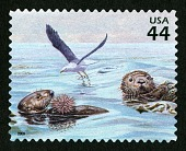 view 44c Western Gull, Sourthern Sea Otters, Red Sea Urchin single digital asset number 1