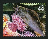 view 44c Yellowtail Rockfish, White-spotted Rose Anemone single digital asset number 1
