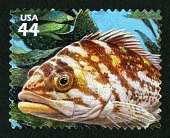 view 44c Copper Rockfish single digital asset number 1