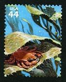 view 44c Northern Kelp Crab single digital asset number 1