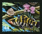 view 44c Treefish, Monteray Turban Snail, Brooding Sea Anemones single digital asset number 1
