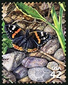 view 42c Red Admiral Butterfly single digital asset number 1