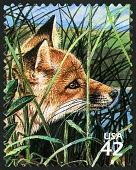 view 42c Red Fox single digital asset number 1