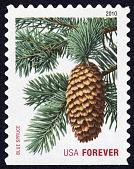 view Forever Holiday Evergreens: Blue Spruce single digital asset number 1