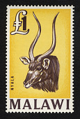 view £1 Nyala Antelope single digital asset number 1