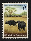 view 1f Cape Buffalos single digital asset number 1