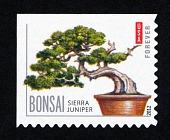 view Forever Bonsai: Sierra juniper single digital asset number 1
