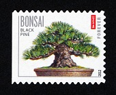 view Forever Bonsai: Black pine single digital asset number 1