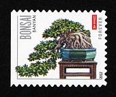 view Forever Bonsai: Banyan single digital asset number 1