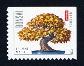 view Forever Bonsai: Trident maple single digital asset number 1