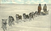 view Photograph of postcard of prize dog team in the Arctic digital asset number 1