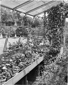 view [Miscellaneous Greenhouses]: interior of greenhouse, possibly in New Canaan, Connecticut. digital asset: [Miscellaneous Greenhouses] [photographic print]: interior of greenhouse, possibly in New Canaan, Connecticut.