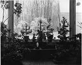view [Miscellaneous Greenhouses]: potted plants in sunny window or solarium, looking out to winter landscape. digital asset: [Miscellaneous Greenhouses] [photographic print]: potted plants in sunny window or solarium, looking out to winter landscape.