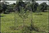 view [Miscellaneous Garden Structures and Features]: protection against deer. digital asset: [Miscellaneous Garden Structures and Features] [slide (photograph)]: protection against deer.