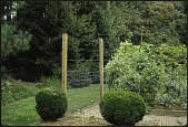 view [Miscellaneous Garden Structures and Features]: deer fence protecting vegetable garden. digital asset: [Miscellaneous Garden Structures and Features] [slide (photograph)]: deer fence protecting vegetable garden.