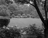 view [Rollins Garden]: looking across lawn, with peonies in foreground. digital asset: [Rollins Garden] [safety film negative]: looking across lawn, with peonies in foreground.