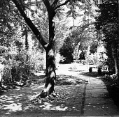 view [Unidentified Garden in Unknown Location]: looking down flagstone path with stone bench in distance. digital asset: [Unidentified Garden in Unknown Location] [contact print]: looking down flagstone path with stone bench in distance.