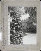 view J. Horace McFarland company collection digital asset: Bellingrath Gardens & Home [photoprint]