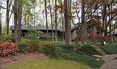 view [Ruthie's Garden]: The mondo grass lawn under the shade of pine, oak, dogwood and redbud. digital asset: [Ruthie's Garden]: The mondo grass lawn under the shade of pine, oak, dogwood and redbud.: 2017 April 2