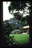 view [Untitled Garden in Los Angeles, California]: overall view of rear garden through shrubbery and trees. digital asset: [Untitled Garden in Los Angeles, California] [slide]: overall view of rear garden through shrubbery and trees.