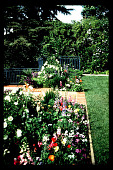 view [Untitled Garden in Los Angeles, California]: wide flower border at rear of lawn. digital asset: [Untitled Garden in Los Angeles, California] [slide]: wide flower border at rear of lawn.