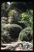 view [Untitled Garden in Hollywood, California]: flagstone steps winding through drought-tolerant planting. digital asset: [Untitled Garden in Hollywood, California] [slide]: drought tolerant planting.